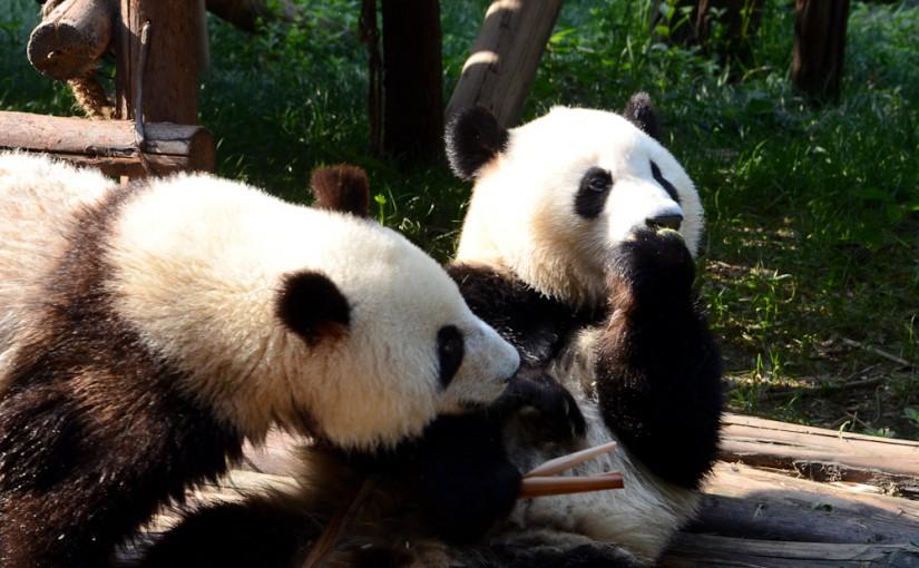 Things to do in Chengdu